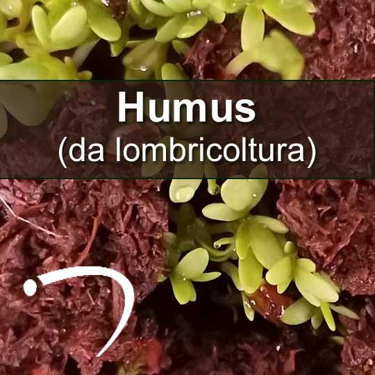 humus-da-lombricoltura