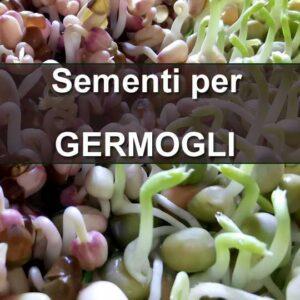 Sementi per Germogli